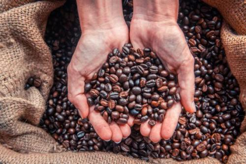 coffee-farming-570x380